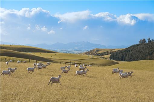 養100只養羊棚設計圖-攝圖網